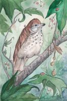 Round Little Wood Thrush by Kitsune-Seven