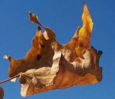 Fall Leaf 1 STOCK by Penny-Stock