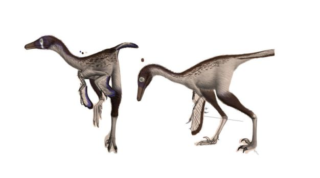 Some unfinnished Troodonts. by Steveoc86