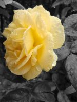 yellowflowerselectivecolor by versaillesjewels