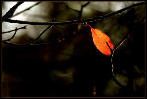 autumn leaves 3 by sergiemag