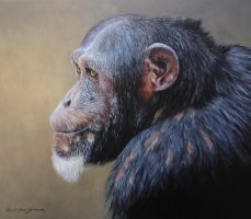 CHIMPANZEE 14 by 12 inches Oil on Panel by chandlerwildlifeart