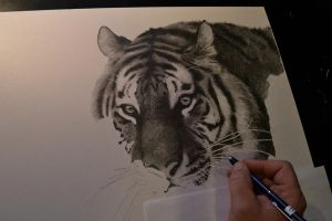 Tiger WIP by graphitemyers
