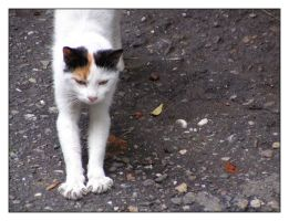 158 by evy-and-cats
