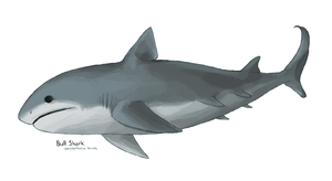 shark week 2011: bull shark by prefined