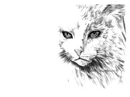 Snow King by Tidus-902000