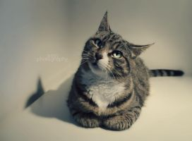 Cat 7 by sisselPhotography