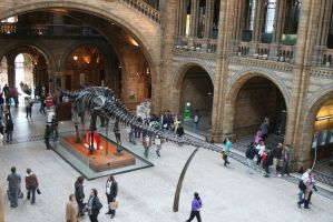 Natural History museum, London by Rovis2
