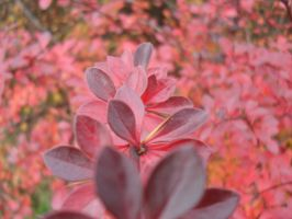 Red Autumn by 76204016