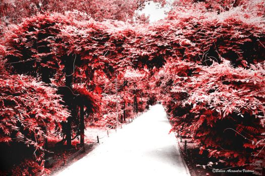 The Red Avenue by acydkitt3n