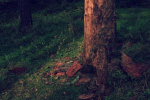 Old tree. by Peterdoesphotography