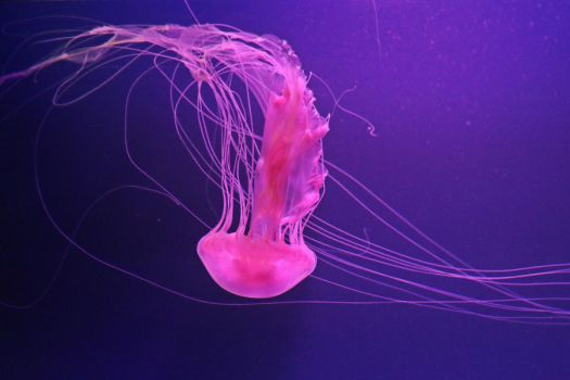 Jellyfish Stock 44 by Malleni-Stock