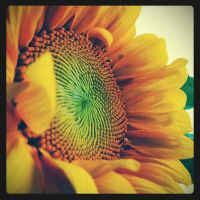 Good morning, Sunflower by raverqueenage