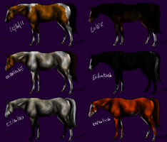 Coloured and Chrome Thoroughbred and Standardbred by Elder0Flower