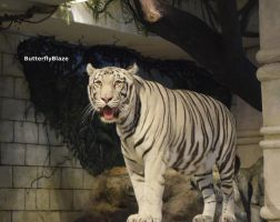 White Bengal Tiger #4 by ButterflyBlaze