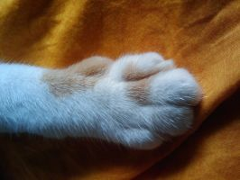 The puurrrrfect PAW by XaraaKay