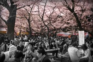Tokyo Hanami by FightTheAssimilation