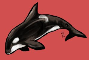 Orca by Sombraluz-Images
