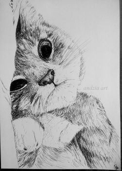 Cat by Anna655