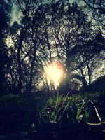 Sun through the forrest by Bouwland