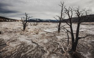 Mammoth Hot Springs by lepersabstain