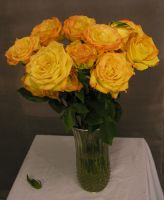 Gold Roses 09 by lockstock