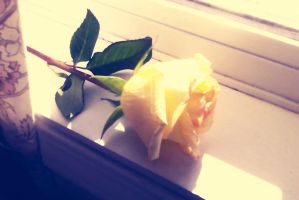 Beauty and Simplicity of a Rose by VeiledElegance