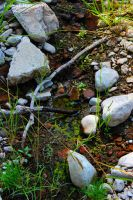 Creek Bed by FlashyFashionFraud