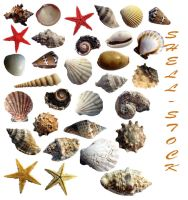 31 shells - stock by aswad-hajja