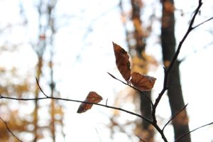 Leaf Butterfly by michelleable