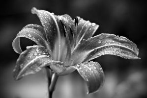 Droplets by dylanpeirce