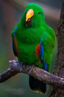 Talkative Green Parrot by KarlDawson
