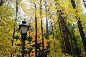 Autumn Lampost by Ravncat