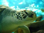 Sea Turtle by k4tt