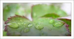 Raindrops by MichelleMarie