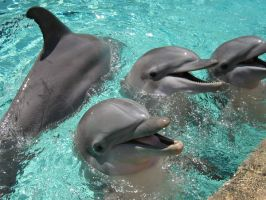 Dolphins at SeaWorld by nath0r