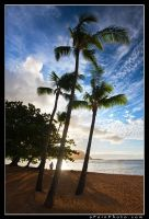 Palms In Paradise by aFeinPhoto-com