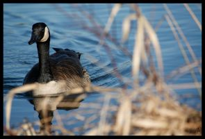 Symbol in the Reeds by KDesJardins