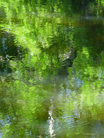 Green abstract by water by Mogrianne