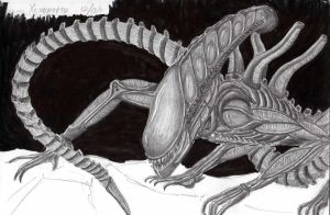 Alien Xenomorph - Finished by Red1332