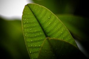 noleaf by TeXual