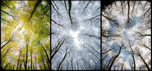 triptych of trees by pnewbery