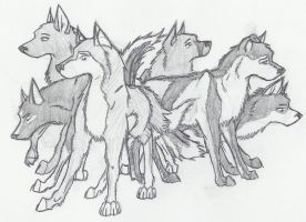 Anime Drawings Of Wolves In Pencil