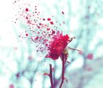 decay by Sylwe