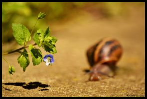 The arrival of the Snail by Panzopen