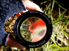 A hand lens for a close up of insects in the bush by jacobjellyroll