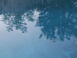 Trees in the water by Arboris-Silvestre