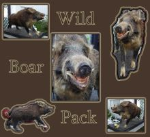 Wild Boar Pack by racehorse87-stock