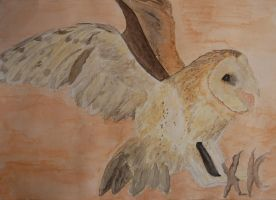 Hunting Barn Owl by somna-ARTifacts