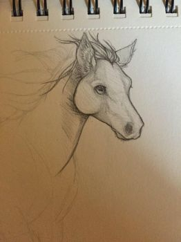 Horse Doodle by QuinnyTheWolf
